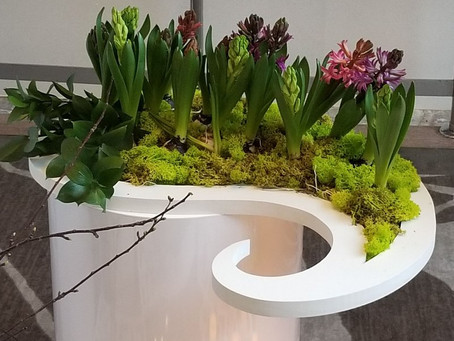Hyacinth display