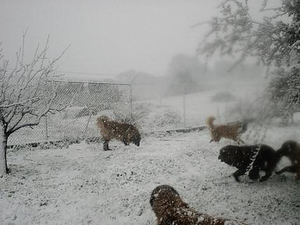 Neve na Ponta da Pinta