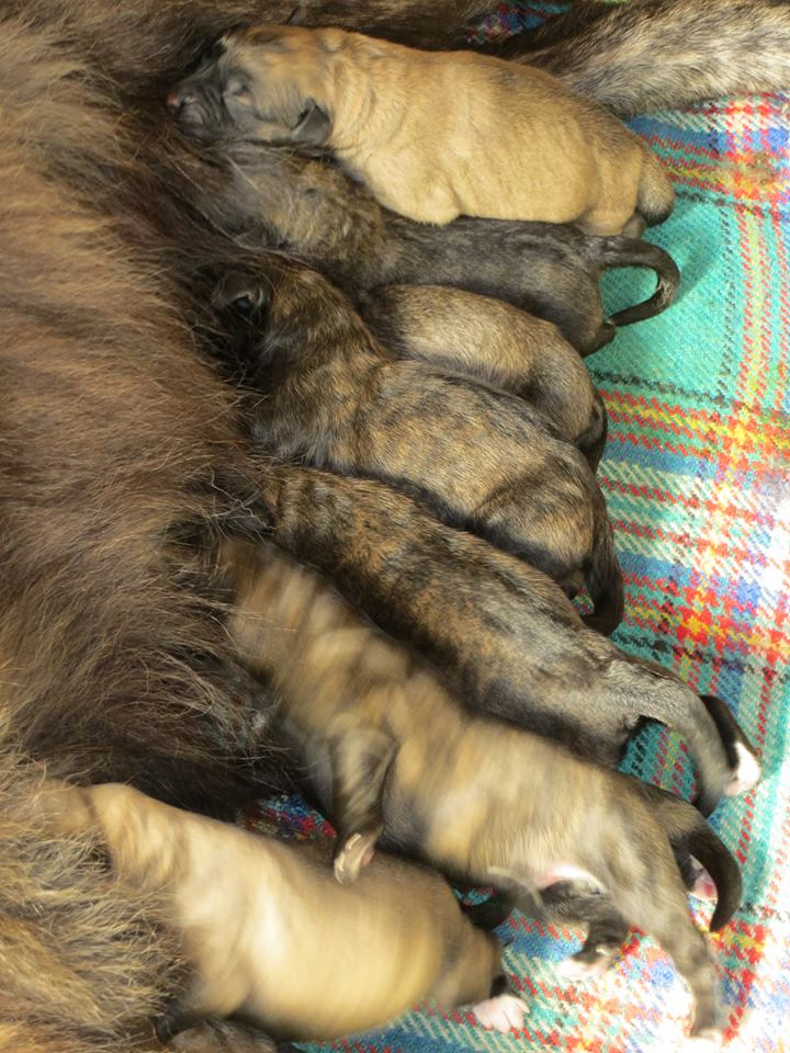 Bebés recém-nascidos Ponta da Pinta
