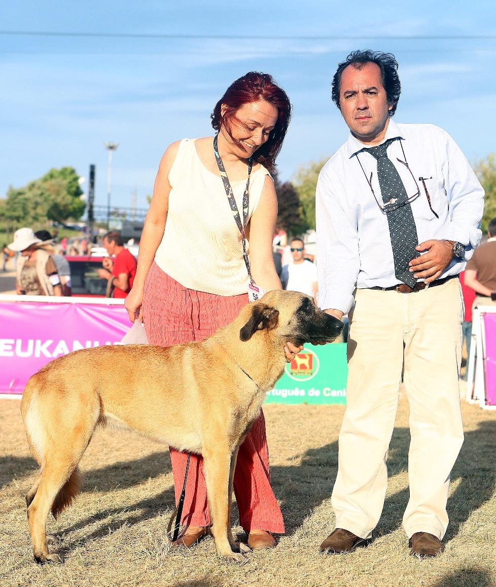 Canela da Pinta da pinta, Cão da Serra da Estrela de pêlo curto