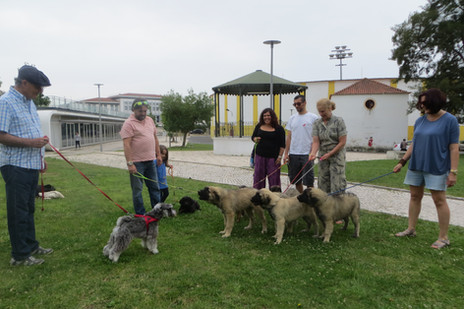 Socialização de cachorros