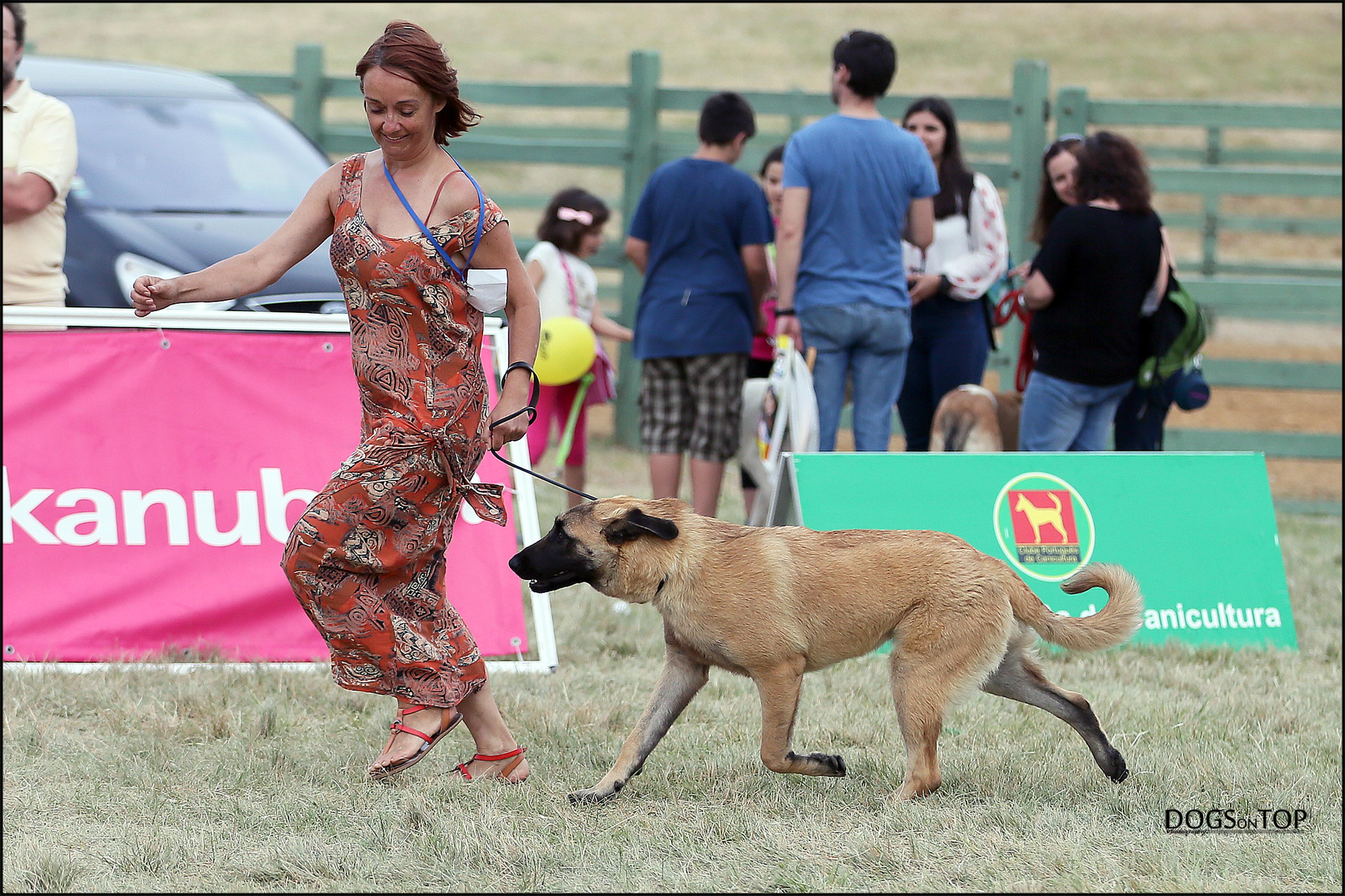 Cão da Serra da Estrela. Dogs on Top