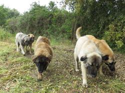 cadelas na Ponta da Pinta