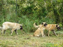 cadelas na Ponta da Piinta
