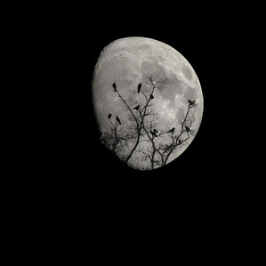 🌛 - Lune Croissante - 🌜