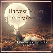 Harvest insta.png