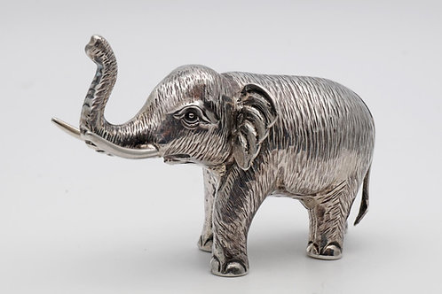 Indian silver elephant