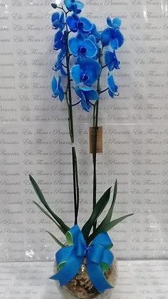 Orquidea azul no vidro