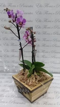 Mini orquídea - y2