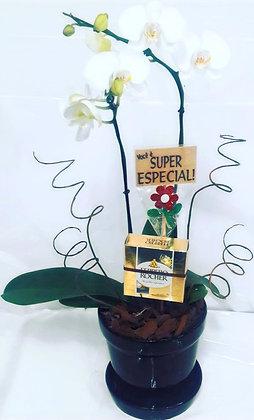 Orquidea Phalaenopsis com Ferrero Rocher e Plaquinha