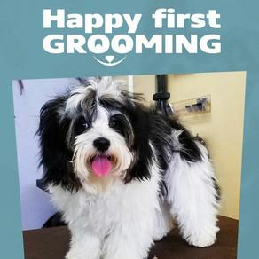 How often should I get my dog groomed?