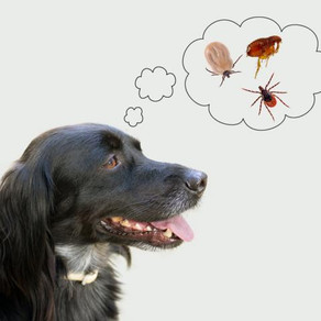 Parasites: how to eliminate and prevent ticks