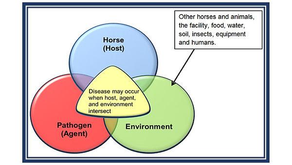 Disease transfer.jpg