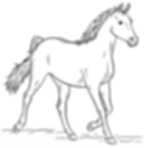 arabian-horse-coloring-page.png