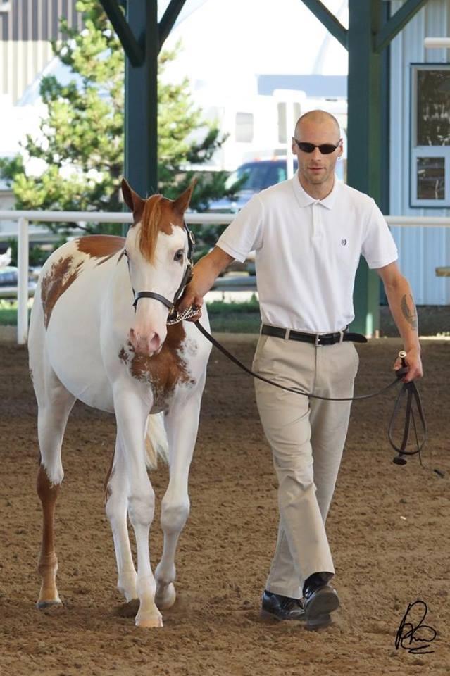 Khemo's Foals