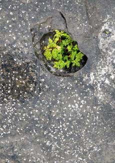 Fragment minéral-végétal