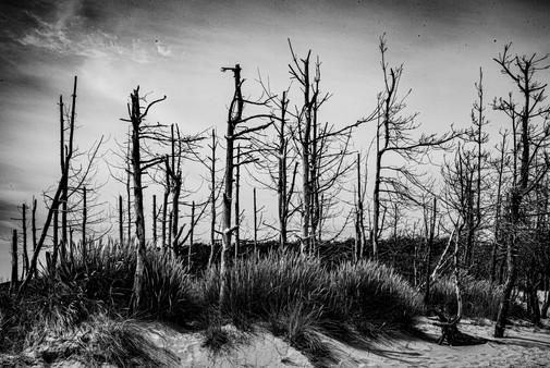 Destroyed Forest.jpg