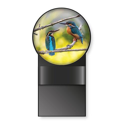 Specmate Kingfishers