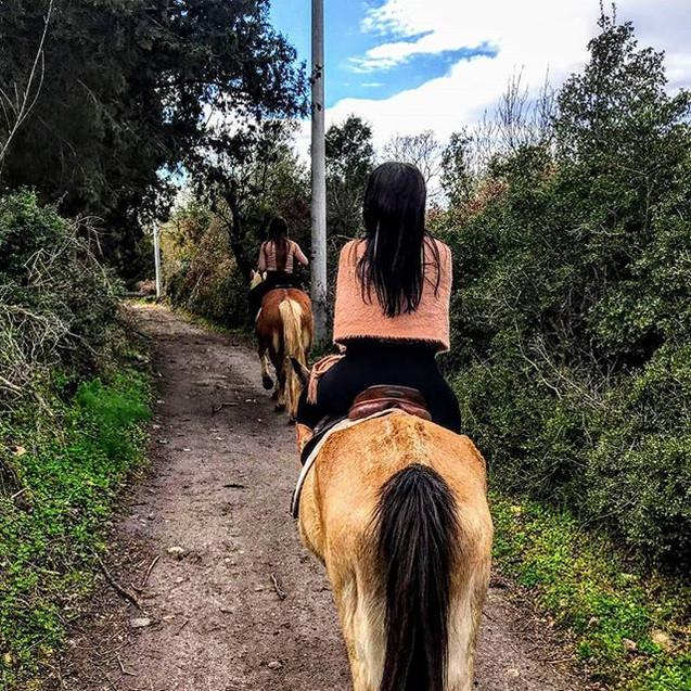At safarilerimiz devam ediyor. #horsesaf