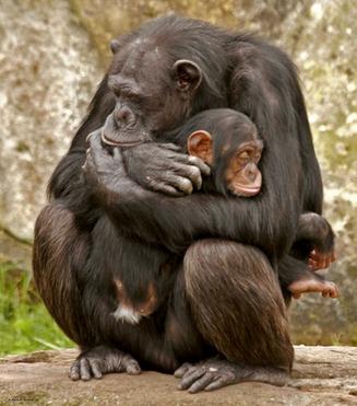 ¿Tienen empatía los animales?