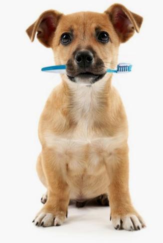 Higiene oral en perros y gatos