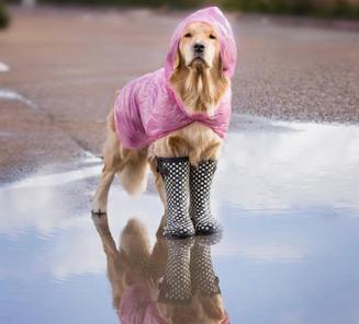 ¿Cómo afecta el frío a nuestros animales de compañía?