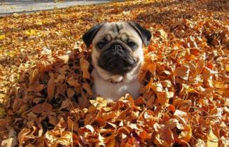 El otoño, la estación preferida de los ácaros