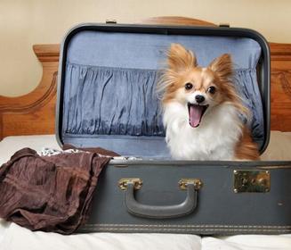Auge en alojamientos Pet Friendly en España