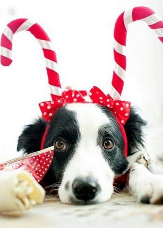Descubre qué alimentos navideños son dañinos para nuestras mascotas