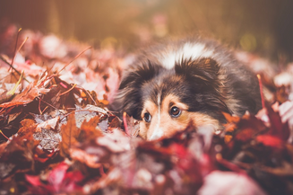 ¡Saludad al otoño, bichos!