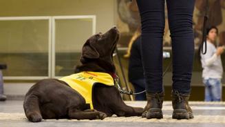 La gran aportación de los perros de asistencia