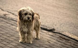Prevención y solución frente al abandono animal