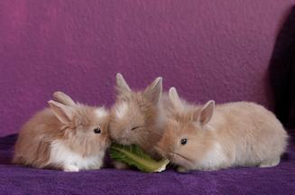 La dieta del conejo