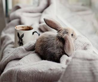 Cosas a tener en cuenta si tienes un conejo como mascota