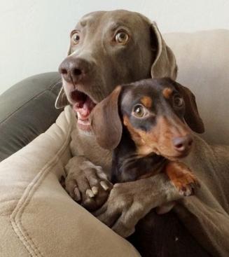 Mi perro teme los ruidos fuertes