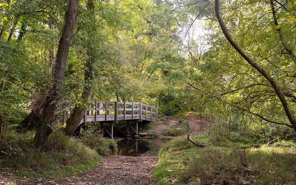 roydon-woods-the-new-forest-18.jpg