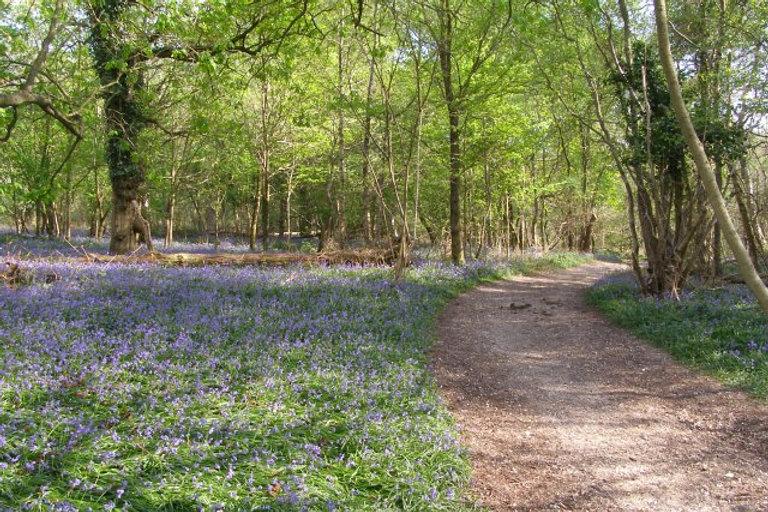 Path_through_Calveslease_Copse,_Roydon_W