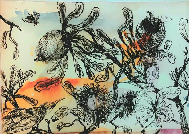 2. LAKEland-Etching-Banksias Orange