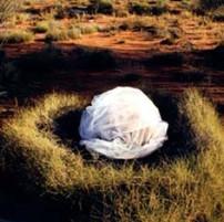Desert Rebirth-Lakeland