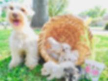 eva dogs.JPG