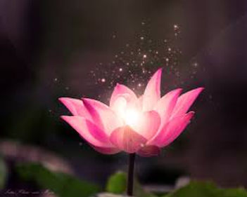 Lotus with little lights.jpg