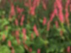 LO Flowers Europe 2.jpg