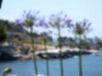 LO Blurry Violet Flowers CA 2010.jpg