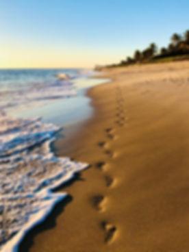 Lily's Footprints 2.jpg