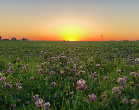 Rochester Sunrise in June.jpeg