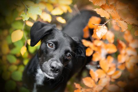 Hundefotografie Berlin und Brandenburg SNüFFEN PFOTOGRAFIE