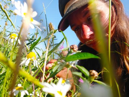 Récit d'une productrice herboriste : une journée en cueillette