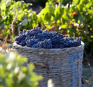 santorini wine.jpg