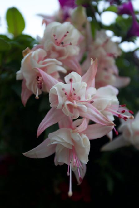 Flora Of Ireland