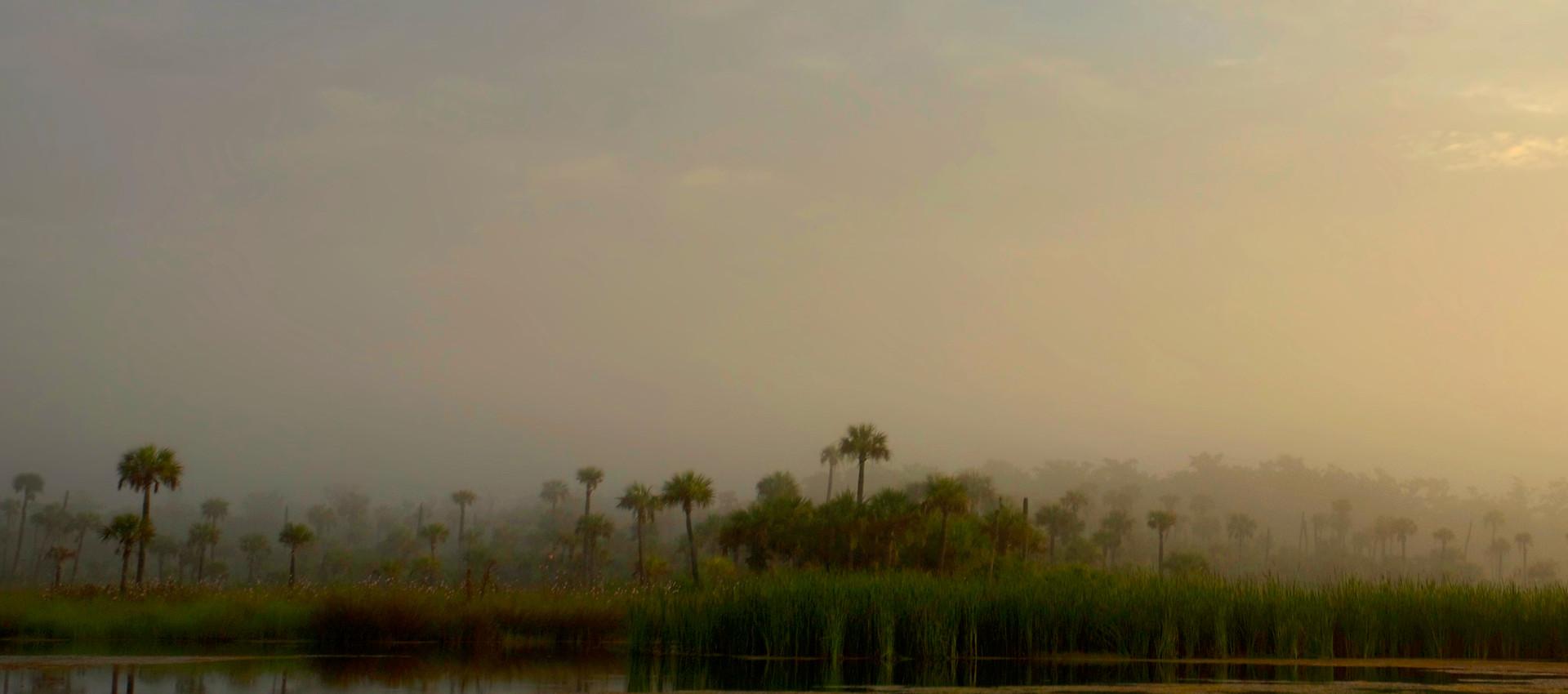 Fakahatchee Fog